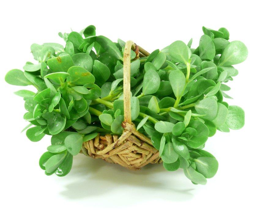 польза овощей портулака