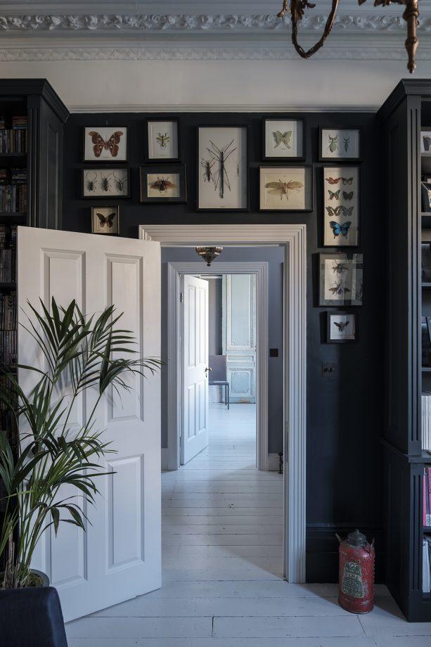 идеи стен галереи с насекомыми таксидермии в рамке